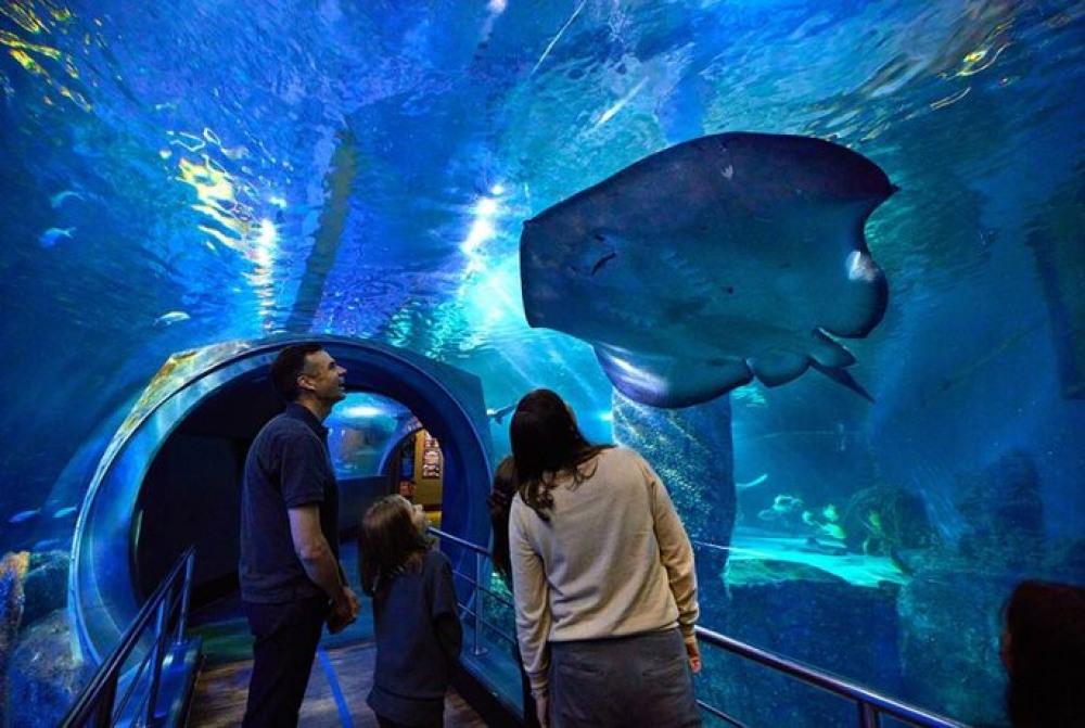 6 mins walk to SEA LIFE Melbourne Aquarium
