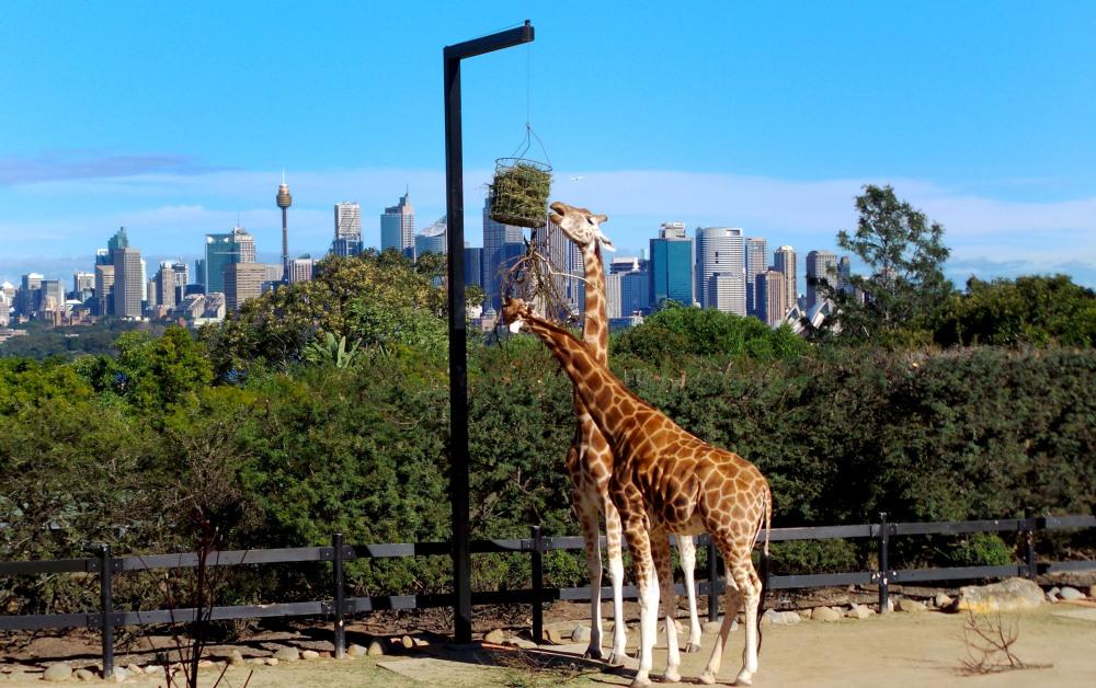 16 mins drive to Taronga Zoo Sydney